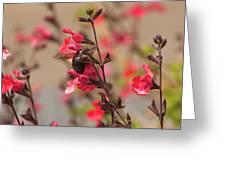 California Bumble Bee Greeting Card
