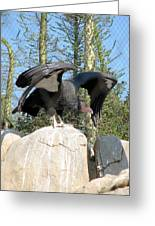 California Condor Greeting Card