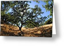 California Oaks Greeting Card