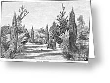 California: Pasadena, 1890 Greeting Card