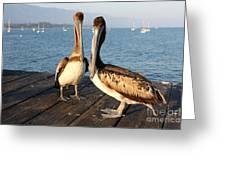 California Pelicans Greeting Card