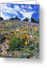 California Poppies And Lupins On A Hill Greeting Card