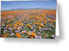 California Poppies And Other Greeting Card