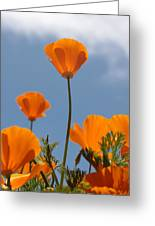 California Poppies Greeting Card by Denice Breaux