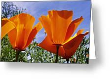California Poppies Eschscholtzia Greeting Card