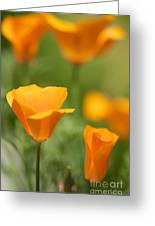 California Poppy Cluster Greeting Card