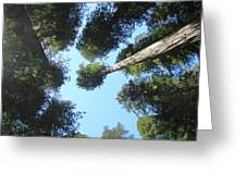California Redwood Trees Fine Art Prints Forest Greeting Card