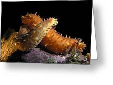 California Sea Cucumber Love Greeting Card