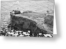 California Sea Lions Black And White La Jolla Shores San Diego  Greeting Card