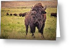 Call Of The Bison Greeting Card