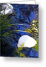 Calla Lily 6 Greeting Card