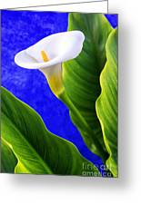 Calla Over Blue Greeting Card