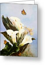 Callas And Butterflies Greeting Card