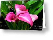 Callas In A Park Greeting Card