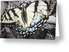 Callaway Tiger Swallowtail Butterfly Greeting Card