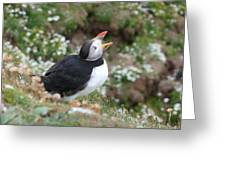 Calling Puffin Greeting Card by George Leask