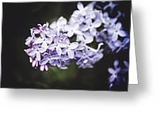 Calming Lilac Greeting Card