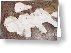 Camarasaurus Vertebrae Covered Greeting Card