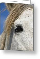 Camargue Horse Equus Caballus Eye Greeting Card