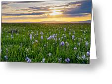 Camas Fields Greeting Card