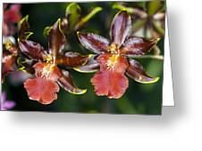 Cambria Orchid Flowers Greeting Card by Dr Keith Wheeler