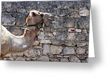 Camel At Sebastia Greeting Card