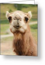 Camel Cameo Greeting Card