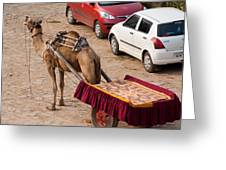 Camel Ready To Take Tourists For A Desert Safari Greeting Card