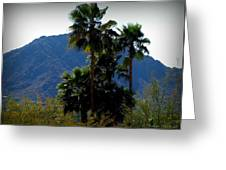 Camelback Beyond The Palms Greeting Card