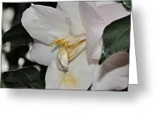 Camellia 18 Greeting Card