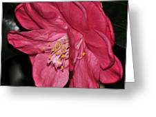 Camellia 23 Greeting Card