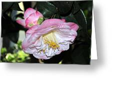 Camellia 30 Greeting Card