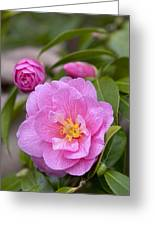 Camellia Camellia X Williamsii Donation Greeting Card
