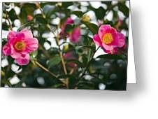 Camellia Flower (camelia Japonica) Greeting Card by Dr Keith Wheeler