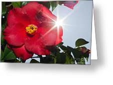Camellia Flower Greeting Card by Mats Silvan