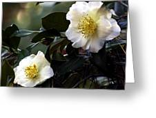 Camellia Nineteen Greeting Card
