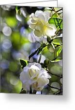 Camellia Thirteen Greeting Card