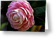 Camellia Twenty-three Greeting Card
