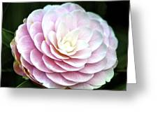 Camellia Twenty-two  Greeting Card