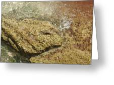 Camouflage Crabs Greeting Card