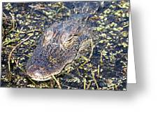 Camouflaged Gator Greeting Card by Carol Groenen