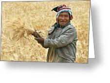 campesino cutting wheat. Republic of Bolivia. Greeting Card