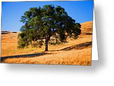 Campo Seco Tree Greeting Card