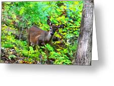 Can I Help You My Deer Greeting Card