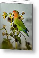 Can You Say Pretty Bird? Greeting Card
