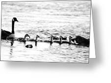 Canada Geese Family II Bw Greeting Card