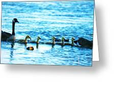 Canada Geese Family II Greeting Card