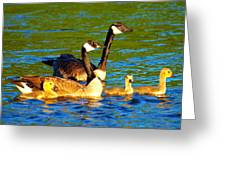 Canada Geese Family Greeting Card by Paul Ge