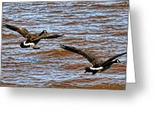 Canada Geese In Flight Lake Superior Greeting Card