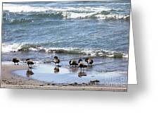 Canada Geese In Lake Erie Greeting Card